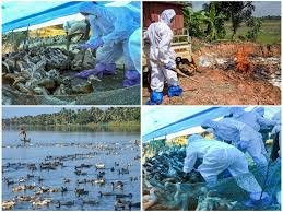 Another Tension: Here Comes Bird Flu As Nation Fighting Against COVID-19 Pandemic