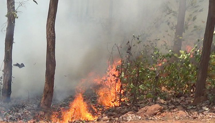 Odisha CM Directs Officials To Ensure Conservation Of Forest